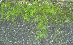How to safely remove moss from tarmac